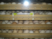 Инкубатор фермерский для яиц
