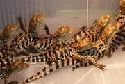 Продаю рептилий и экзотических животных в Краснодаре