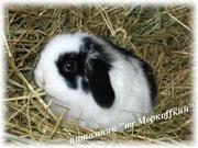 Кролики Карликовые,  Кролики Декоративные в Краснодаре