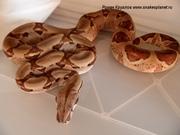 Центр по разведению рептилий