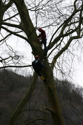 Спил деревьев методом промышленного альпинизма