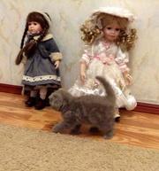 Вислоухих котят продам в Краснодаре