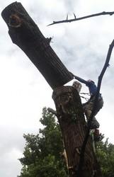 Профессиональный спил деревьев любой сложности