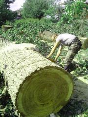 Спил и обрезка деревьев любой сложности