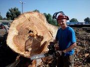 Спил,  обрезка деревьев (любой сложности)
