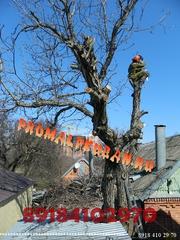 Спилить дерево Краснодар.Спилить деревья и ветки бензопилами Краснодар