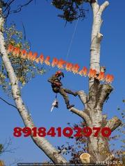 Спил деревьев на Кладбище  Краснодар  Альпинист  Мы настоящие профи в своем деле.