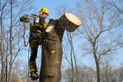 Спил деревьев,  уборка участка,  вывоз мусора Краснодар