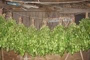 Продажа больших УРАЛЬСКИХ березовых веников. Краснодар