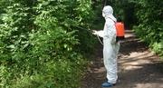 Обработка от Клещей,  комаров,  уничтожение осиных гнезд. Краснодар