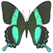 Лучшие подарки на Новый Год - Живые Бабочки!