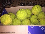Маклюра плоды (адамово яблоко),  готовая настойка,  мазь