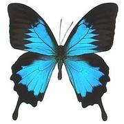Живые тропические бабочки Бабочки Лучший подарок!