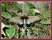 Экзотические Живые Бабочки изЮжной Америки