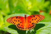 Яркие Живые Бабочки из  ЮАР