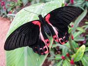 Экзотические Живые Бабочки из Филиппин