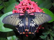 Яркие Живые Бабочки изЧили