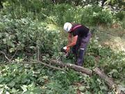 Арбористика , спил и кронирование деревьев,  удаление пней.