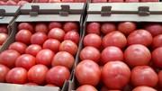 Продаем помидоры оптом в краснодарском крае, помидоры оптом краснодар